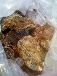 100812_oyster.JPG